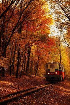 Autumnal train ride