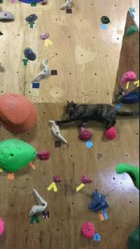 Teaching Humans How to Climb | Funny Cat GIFs