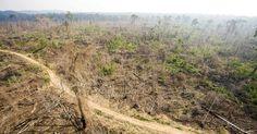 La déforestation a augmenté en Amazonie en 2013