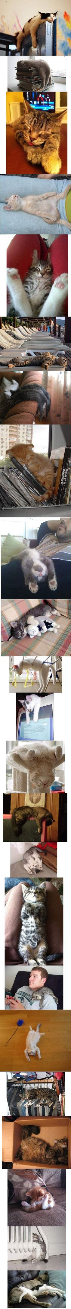 Great sleeping cats pictures. I don't usually post cat pictures, but any owner will recognise these feats of gymnastics.