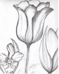 Graphite Drawings, Pencil Art Drawings, Art Drawings Sketches, Flower Sketches, Cute Animal Drawings, Cute Drawings, Flower Images, Flower Pictures, Beautiful Easy Drawings