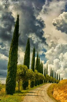 Poplar lined road in Tuscany, Italy