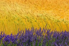 """""""Impressionistic"""".The colors of Provence by Veronika K Ko on yourshot.nationalgeographic.com """"The wind that shakes the barley""""..The colors of Provence,the colors of Van Gogh.. I love colors and I love that beautiful color contrast! I love how the..."""