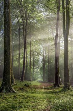 bellasecretgarden: Buckholt Wood, Cranham, Gloucestershire, England, shot by Rob Wolstenholme… | Magic moments in nature | Pinterest)