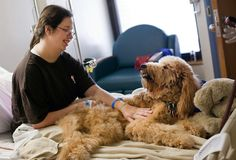 These 29 Incredible Therapy Dogs Prove The Power Of A Loving Companion