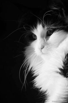 10 Best Amazing Videos For Cats