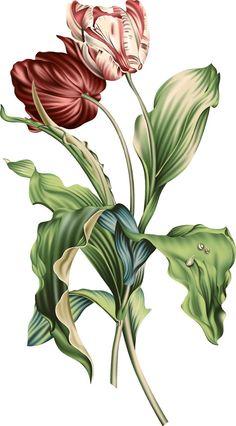 Botanical Flowers, Flowers Nature, Diy Flowers, Flower Bird, Peony Flower, Black And White Flower Tattoo, Baroque Pattern, Geometric Flower, Bunch Of Flowers