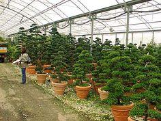 P&B Hortikultura, rasadnik