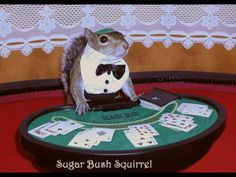 The Biggest Online Privacy Risks for 2013 (and, no, it's not Casino Squirrel) | CBS Money Watch Cute Squirrel, Squirrels, Hedgehogs, Funny Squirrel Pictures, Cute Baby Animals, Funny Animals, Lol Play, Sugar Bush, Calendar Pictures