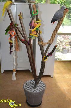 Accessoire : comment fabriquer un arbre à perroquets ? Diy Parrot Toys, Diy Bird Toys, Diy Bird Cage, Bird Cages, Parrot Perch, Parrot Bird, Parrot Play Stand, Parakeet Toys, Bird Stand