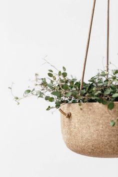Oakland designer Melanie Abrantes started experimenting with cork two years ago. She's been covered in cork dust ever since. Read on to see her stylish pots and hanging planters: