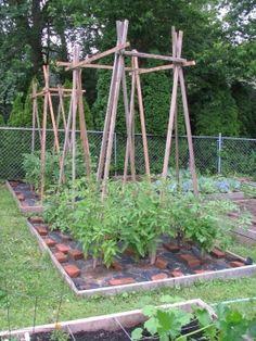 tomato trellis - a way to repurpose the wedding trellis?