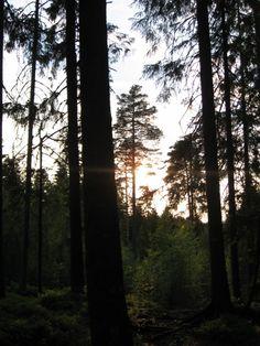 Solnedgang Trunks, Plants, Stems, Tree Trunks, Plant, Planting, Planets