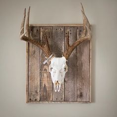Whitened whitetail deer skull on weathered wood wall plaque with skull mounting bracket.