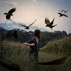 Diggie_Vitt - birds - crows