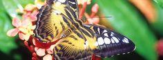 Audubon Insectarium - New Orleans, Louisiana on RueBaRue