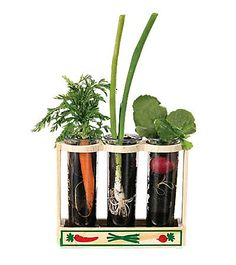 Root viewer kit - a must for the Easter baskets of my little gardeners!