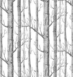 Background from Birch Trees without Leaves : Custom Wall Decals, Wall Decal Art, and Wall Decal Murals | WallMonkeys.com
