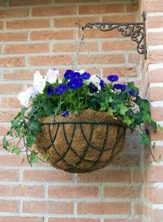 Pictures of Flowers: Pansies and trailing ivy look super together! Container Garden Design: Pansies, Trailing Ivy  This garden design shows a really easy-to-care-for hanging basket. The two main flowers for this combination