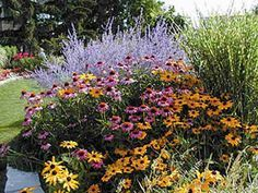 perennial garden layout with black eyed susans and russian sage - Google Search