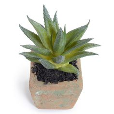 Succulent-Aloe plant - New Growth Designs
