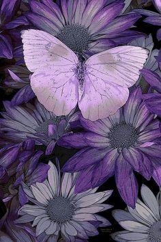 Isa...mariposa...lila...fondo