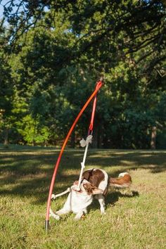 Tether Tug - The best playmate a tugging obsessed dog ever had. Available from ActiveDogToys.com