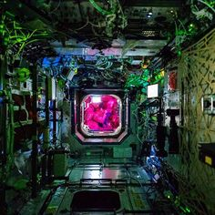 """""""The Destiny Lab is the guts of the International Space Station's research and command and control capabilities. It's also beautiful.  The brilliant pink…"""""""