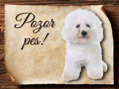 Cedulka Bišonek - Pozor pes Teddy Bear, Throw Pillows, Toys, Animals, Cushions, Animales, Animaux, Decorative Pillows, Teddybear