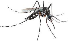 Disso Voce Sabia?: PE tem 1º caso de doença que paralisa os músculos associada a chikungunya