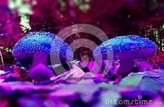 Two mushrooms in the woods of fairy tales, two toadstools and blurred background