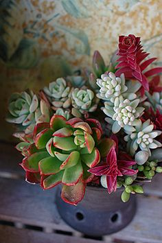 succulents...starting to love these