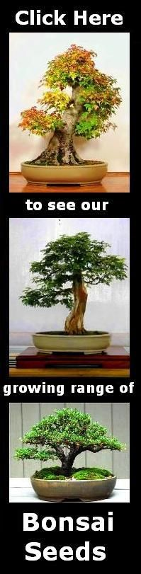 Seeds - 25 Ficus benghalensis Bonsai Seeds - Banyan Fig Tree, Indian Banyan Tree - Exotic Evergreen was sold for R4.40 on 18 Jul at 14:16 by Seeds and All in Port Elizabeth (ID:67958468)