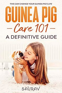 Why Do Guinea Pigs Bite? (How Hard & Ways To Stop them) – Guinea Pig 101 Pet Guinea Pigs, Guinea Pig Care, Pig Diet, Pig Showing, Pigs Eating, Gastrointestinal Disease, Prey Animals, New Environment