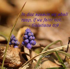 Galatians 6:9 © dp  http://www.pinterest.com/debatnc/