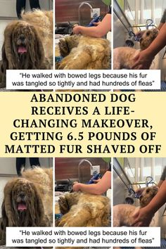 Today we'd like to share with you the results and a journey of a very special transformation. It's a story about a Shih Tzu called Simon,