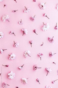 Image in Pink 💖 collection by 𝐃𝐚𝐲𝐝𝐫𝐞𝐚𝐦𝐞𝐫𝐱𝐁𝐞𝐥𝐢𝐞𝐯𝐞 Wallpapers WALLPAPERS | IN.PINTEREST.COM BLOG EDUCRATSWEB
