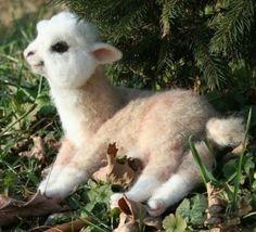 baby llama...I want one!!!