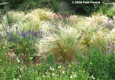 Znalezione obrazy dla zapytania wild grasses