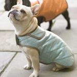 lots of dog clothing patterns