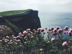 Flowers on top of the world