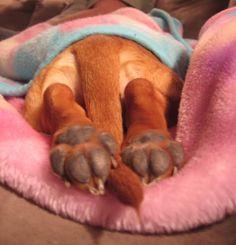 Little Doxies feet.....  gotta love them little feets!  <3