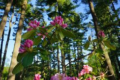 Flowers and tall trees flourishing at Stoneleigh. Natural Garden, Flourish, Acre, Home And Family, Trees, Flowers, Plants, Tree Structure, Plant
