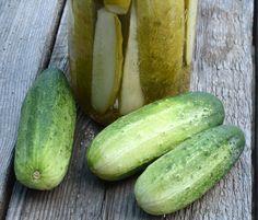 Homemade Pickles Cucumber Seeds Heirloom Pickling Cucumbers Open Pollinated Vegetable Seeds