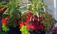 Container Gardening Magazine, 2012 Edition - traditional - landscape - vancouver - by Pot Incorporated Container Plants, Container Gardening, Gardening Tips, Organic Gardening, Flower Containers, Traditional Exterior, Traditional Landscape, Landscaping Tips, Garden Landscaping