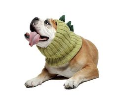 Zoo Snoods Dinosaur Dog Costume - Neck Ear Warmer Headband Protector * Nice of your presence to drop by to see the photo. (This is an affiliate link) Dog Halloween Costumes, Dog Costumes, Costume Ideas, Dog Snood, Minnie Mouse, Ear Warmer Headband, Ear Warmers, Pet Clothes, Large Dogs