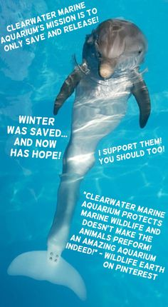 Clearwater Marine Aquarium is amazing! They save and release!