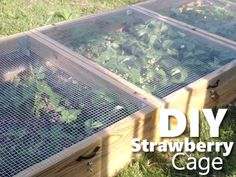DIY Strawberry Cage - protects your strawberries from bugs, birds and animals... #gardening #homestead #homesteading