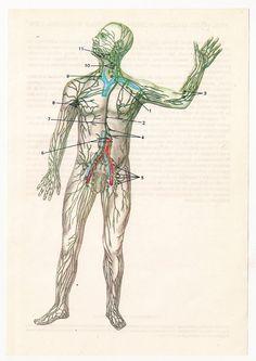 Vintage Anatomical Prints Medical Diagrams skull skeleton   from https://www.etsy.com/listing/116255730/2-vintage-anatomical-prints-medical