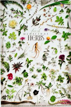 Fresh Medicinal Herbs poster. I would love to frame this & put it in my kitchen...